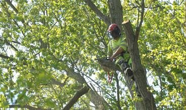 branch-removal