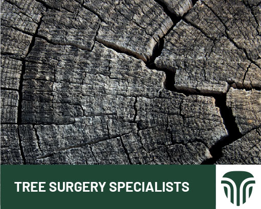 Tree Surgery Specialists