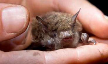 arb-bats