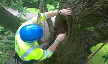 arb-climbing-inspections