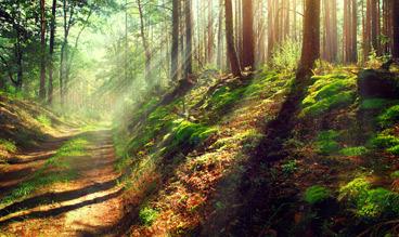 arb-woodland